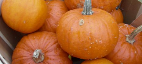 Pumpkins