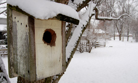 Snowy Bird House